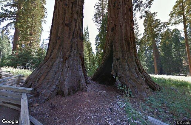 The Giant Sequoia trees - we are void